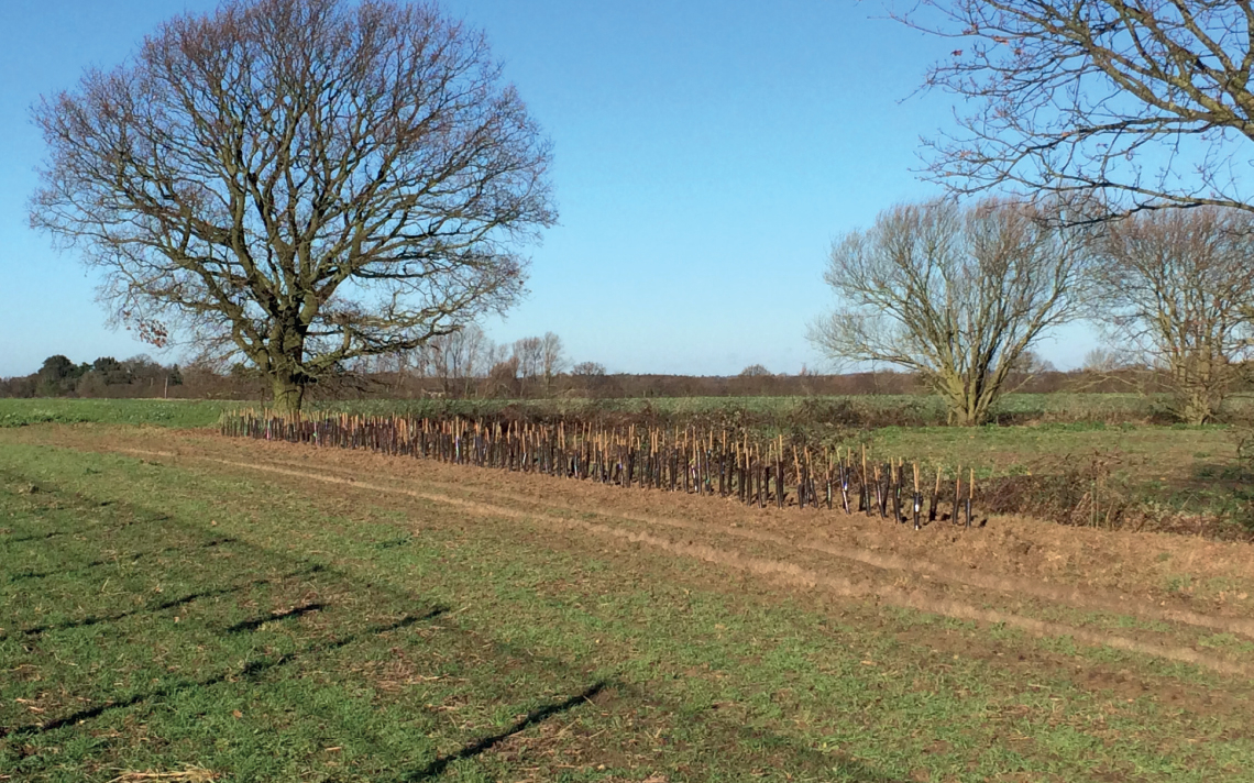 Solar Farm Essex