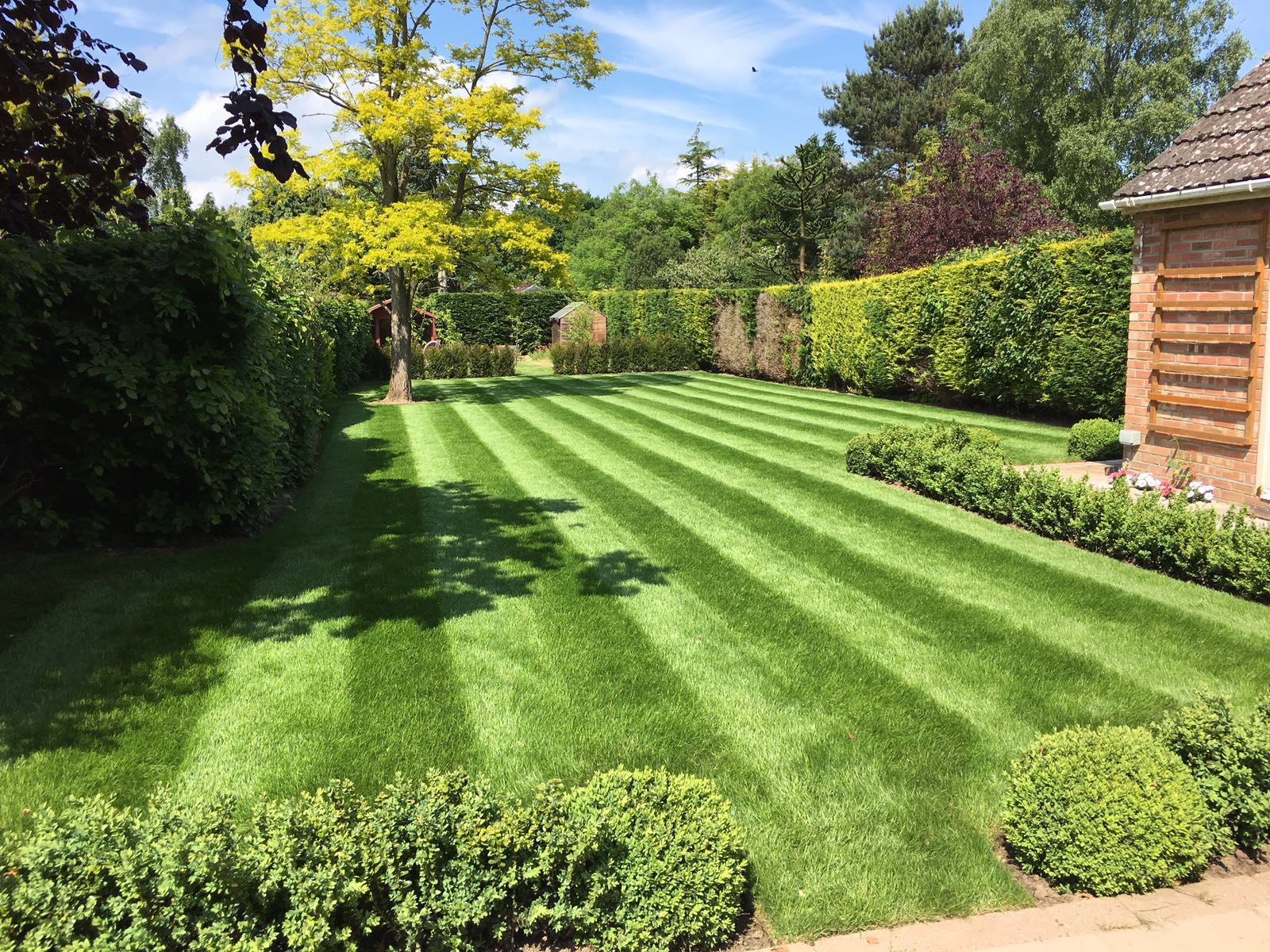 Lawn Treatment Service